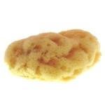 Intimate Sponge 1 piece